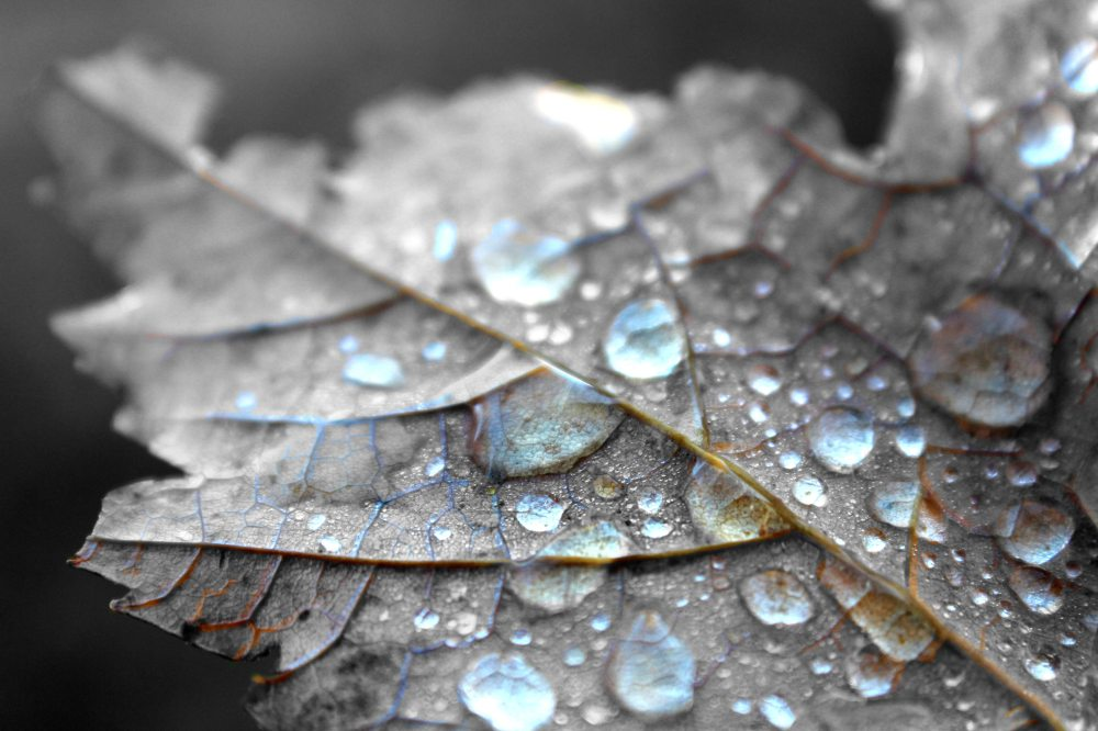 Close up of water on leaf
