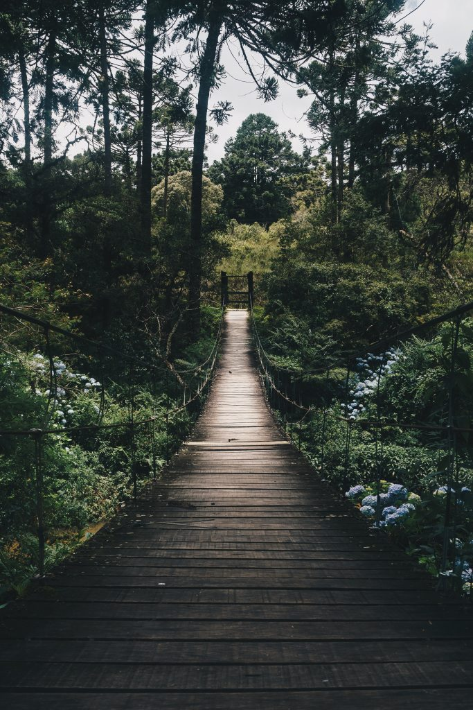 A bridge leading into a forest